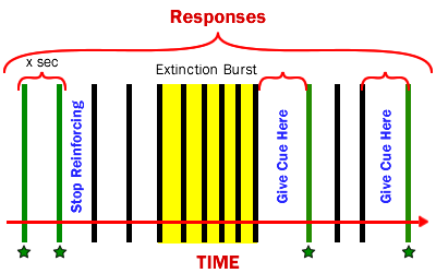 Diagram of Extinction Burst While Adding a Cue